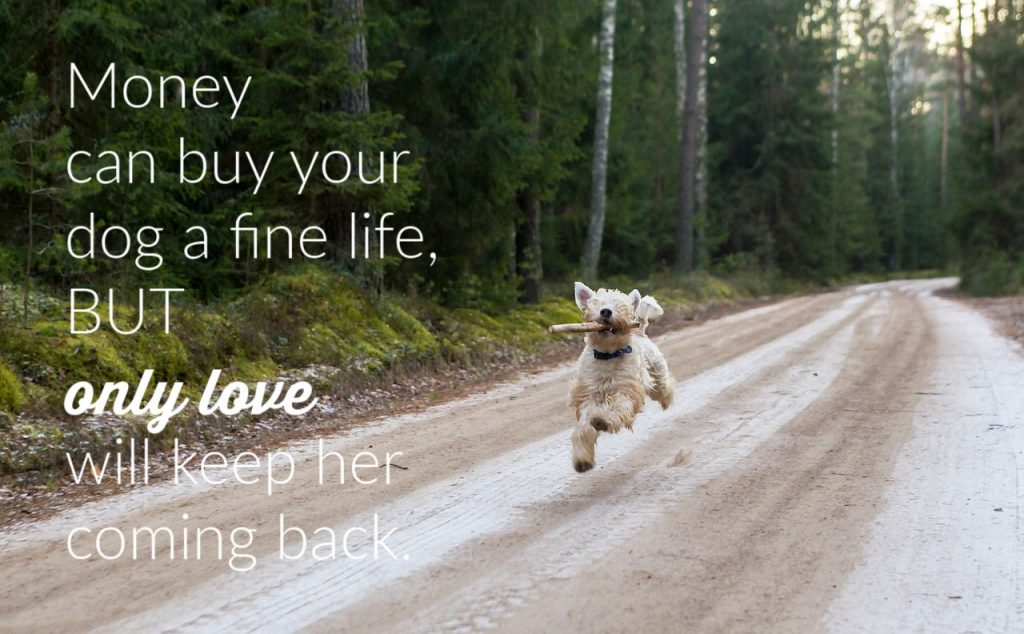 Money Can Buy Your Dog A Good Life But...