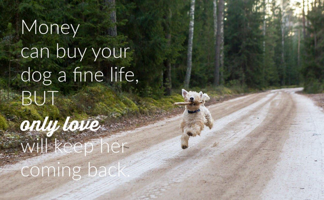 dog-life-quote-1